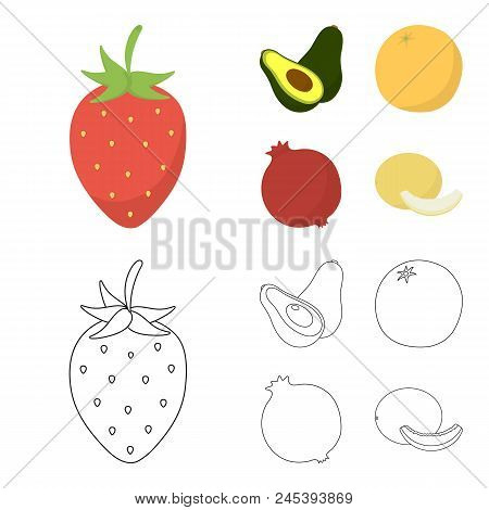 Strawberry, Berry, Avocado, Orange, Pomegranate.fruits Set Collection Icons In Cartoon, Outline Styl