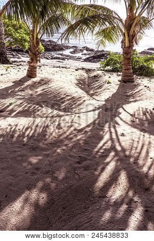 Under The Shade Of Palm Tree Fronds On A Sandy Beach At Lefaga, Upolu Island, Samoa, South Pacific