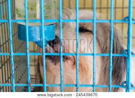 Dog In The Cage Imprisoned In A Blue Cage