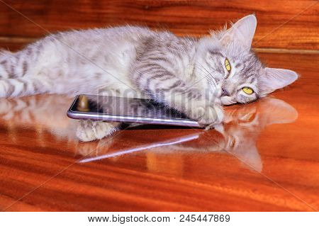 Cat Striped White - Grey Used With Mobile Phone On Wooden Floor. Concept Business Communication High
