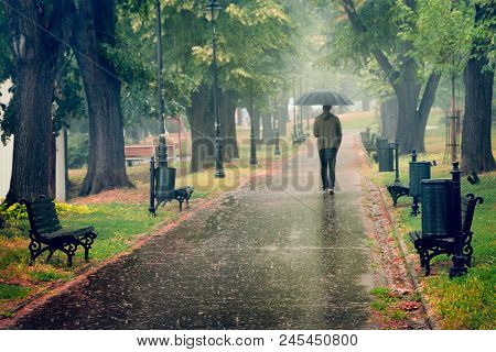 Rainy Day In The Park. Man Walking With Umbrella Under The Rain. Rain In The Park. Rainy Day In The