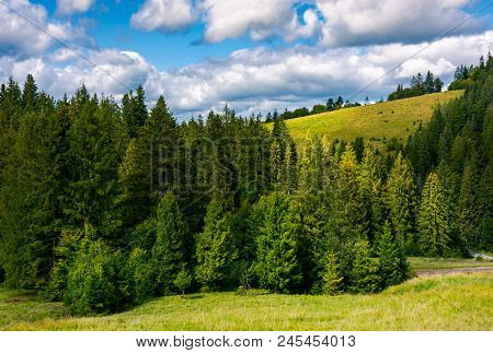 Spruce Forest On The Grassy Hillside. Lovely Landscape With Gorgeous Sky