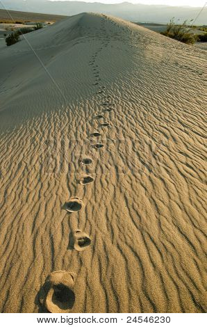 Footprints in the Dunes.