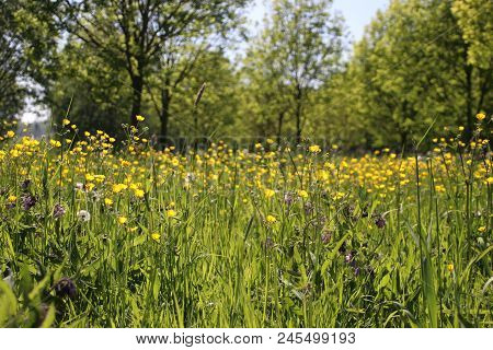 Wild Flowers And Uncultivated Weed In A Park In Zevenhuizen.
