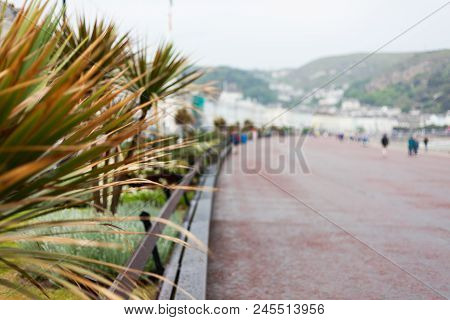 Palm Leaves In Foreground Focus With Blurred Background. Blurred Road With People Walking. Abstract