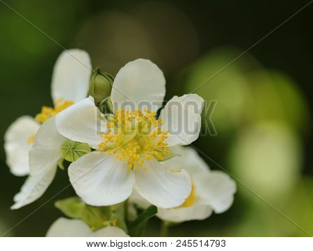 A Beautiful White Flower On A Dark Green Bokeh Background.