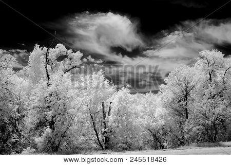 Infrared Black And White Oak Trees Surrounding Sedona Arizona
