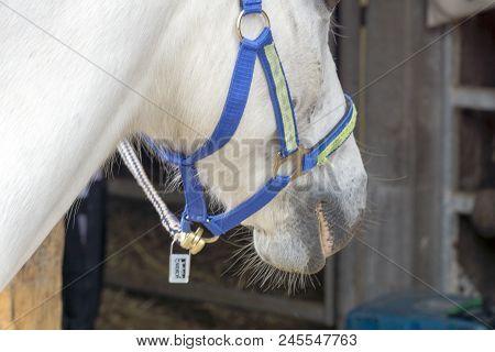 Horses On A Horse Farm In Germany Near Hamburg
