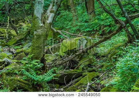 Moss Covered Tree And Boulders In Dried Riverbed In Heavily Shaded Mountain Forest.