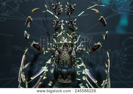 Lobster shell dismantled into pieces Crustacean marine life. poster
