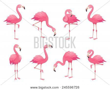 poster of Exotic pink flamingos birds. Flamingo with rose feathers stand on one leg in wild african fauna. Zoo feather rosy plumage cute flam bird cartoon vector isolated set illustration