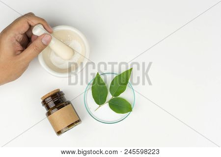 Herbal Medicine Concept. Pharmacist Using A Mortar And Pestle, The Organic Green Leaves In Watch Gla