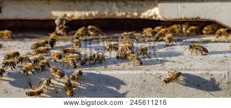 Swarm Of Bees On Beehive Entrance - Web Banner