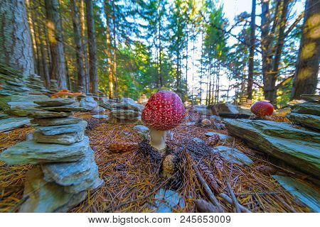 POISONOUS MUSHROOMS AND STACKING STONES IN THE WOOD. Poisonous mushroom with brightly red color cap