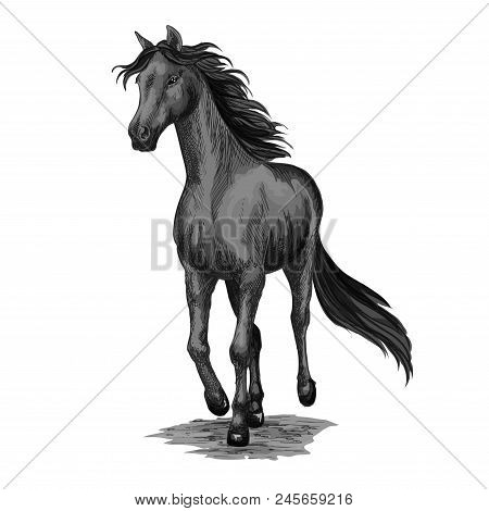 Horse Running In Field Isolated Sketch. Galloping Black Stallion Horse Of Arabian Breed Vector Icon