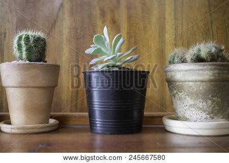 Succulent Plant Pot Decorated In Minimal Style Room, Stock Photo
