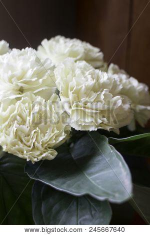White Carnation Flowers In The Vase, Stock Photo