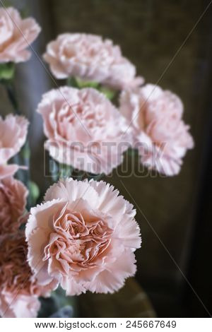 Pink Carnation Flowers In The Vase, Stock Photo