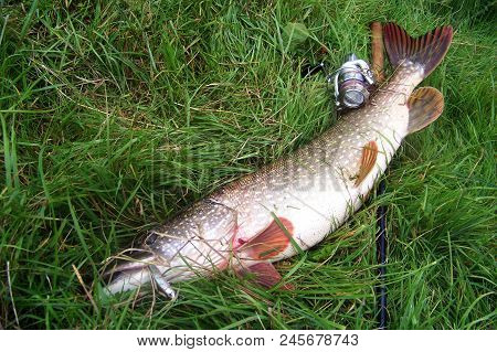 Rybinsk Reservoir, Russia - August, 2017: Fishing For Pike On The Lake, Tackle, Catch