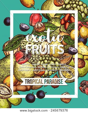 Exotic Fruit Sketch Banner Of Fresh Tropical Berry Branch And Green Leaf. Pomelo, Marula And Jackfru