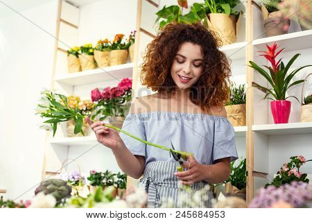 Professional Florist. Nice Young Woman Working While Being A Professional Florist