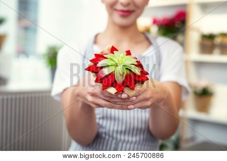 Exotic Plants. Selective Focus Of An Exotic Houseplant Being In Hands Of A Professional Female Flori