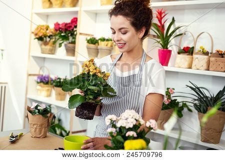 In The Flower Shop. Delighted Professional Woman Working In The Flower Shop While Being A Profession