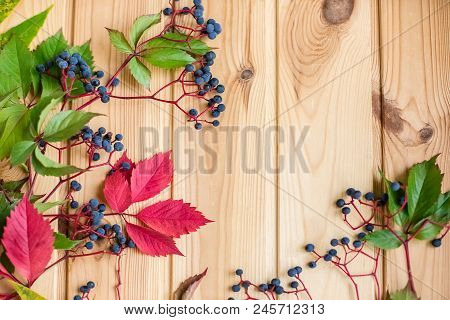 Close-up Of Wild Grape Berries On A Wooden Background