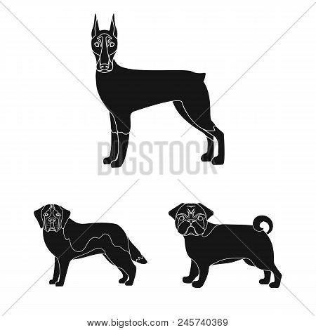 Dog Breeds Black Icons In Set Collection For Design.dog Pet Vector Symbol Stock  Illustration.