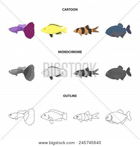Botia, Clown, Piranha, Cichlid, Hummingbird, Guppy, Fish Set Collection Icons In Cartoon, Outline, M