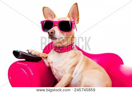 Chihuahua Dog Watching Tv Or A Movie Sitting On A Red Sofa Or Couch  With Remote Control Changing Th