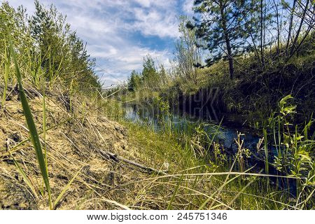 Proto On The Edge Of The Forest Overgrown With Small Shrubs And Dense Grass Against A Blue Cloudy Sk
