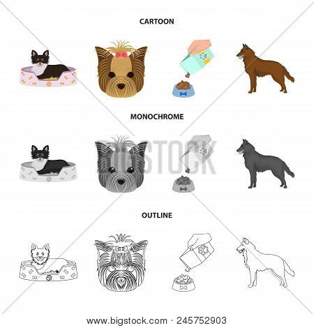 A Dog In A Lounger , A Muzzle Of A Pet, A Bowl With A Feed, A Sheepdog With A Ball In His Teeth. Pet