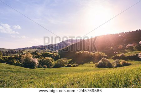 Panoramic View Of Landscape Of Meadows And Woodland. Sunset In Spring Nature.