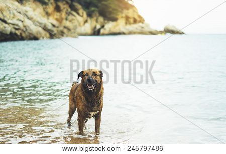 Big Dog Is Swimming In The Sea On A Background Of Water In Nature On The Coast In Summer Enjoying Li