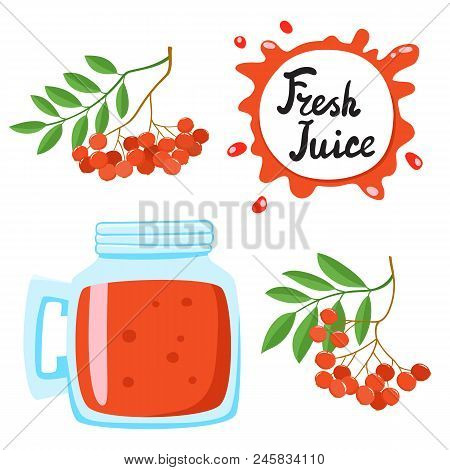 Juice With Ashberry In A Glass Bank, Vector Cartoon Card With Fresh Berries And Smothie Isolated On