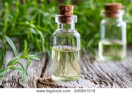 A Bottle Of Mountain Savory Essential Oil With Fresh Satureja Montana Plant