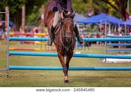 Show Jumping Horse And Rider Competing Hurdles At A Country Show