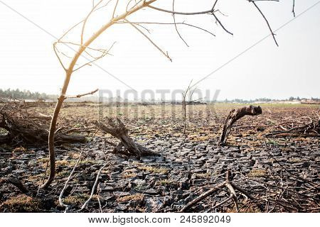 Dry branches on arid soil in summer. poster