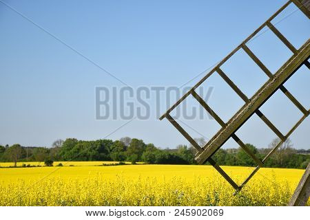 Old Windmill Wing By A Blossom Canola Field At The Swedish Island Oland