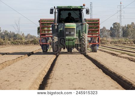 Badajoz, Spain - May 3, 2018: Tractor With Tomato Transplanter Machine Inserting Seedlings On Ground