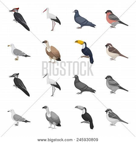 Gull, Toucan And Other Species. Birds Set Collection Icons In Cartoon, Monochrome Style Vector Symbo