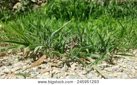 Grass An Rock Meet In A Beautiful Close Up. In This Picture We Can See Grass Growing And Rocks On Th