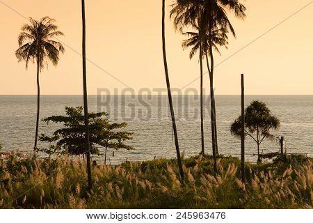 Coconut Palm Tree At Twilight , Phuket Thailand