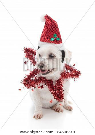 poster of A small pet dog wearing a festive santa hat and red tinsel star. Looking sideways at your message.