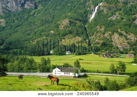 Horse On Grass Pasture On Mountain Landscape In Flam, Norway. Horse On Green Meadow Sunny Day. Summe