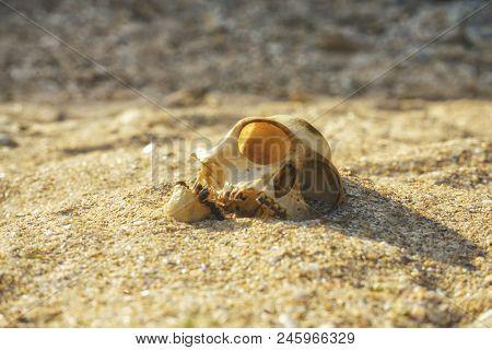 Animal monkey scull in a sandy desert poster