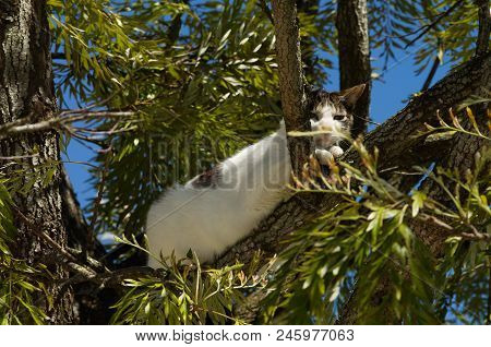 Stray White And Grey Cat Ran Up To A Tree And Waits There For The Threat To Go Away. Looking At The