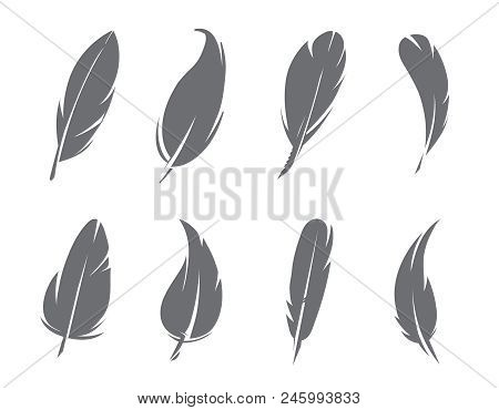 Monochrome Pictures Of Feathers Isolate On White Background. Feather Of Bird Silhouette, Tattoo Sket