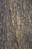 bark of tree nature texture use as background of nature poster
